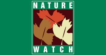Nature Watch [P]
