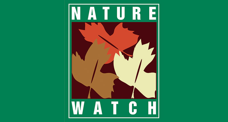 nature-watch-image