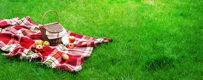 Checkered Plaid Picnic Basket Green Grass Summer