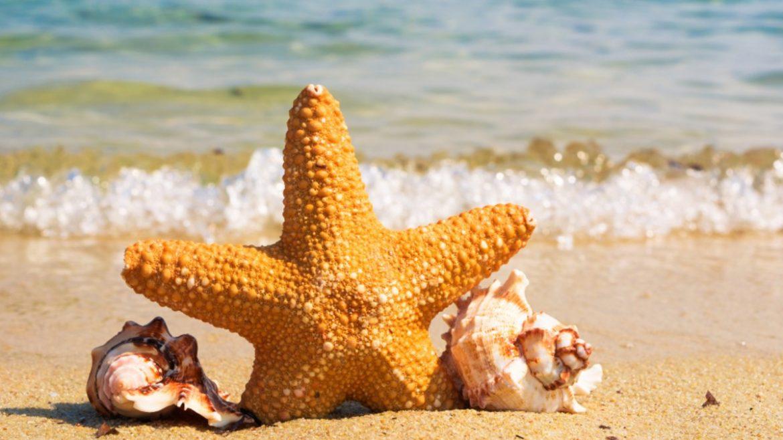 Summer Activities iLEAD Exploration