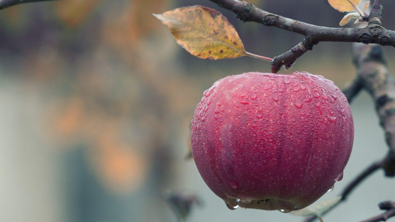 apple-blur-branch-257840