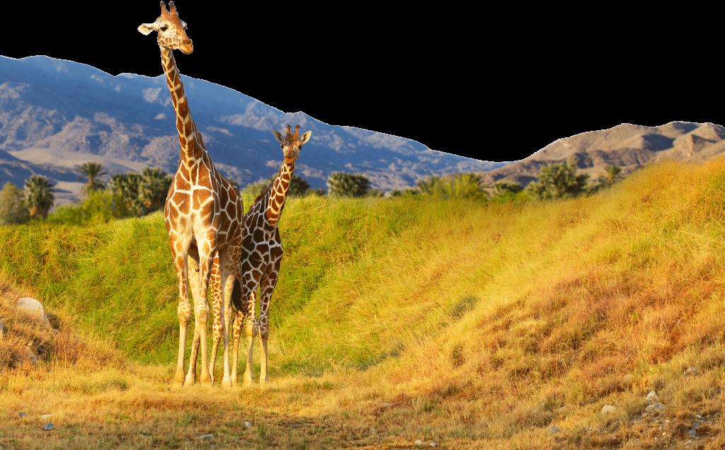 Living Zoo Safari Tours